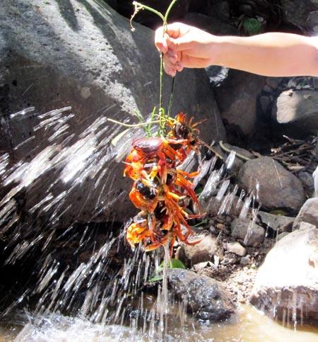 cua đá suối